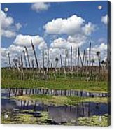 Orlando Wetlands Cloudscape Acrylic Print by Mike Reid