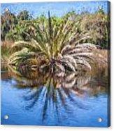 Ormond Scenic Loop Florida Palm Tree Painted  Acrylic Print