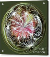 Ornamental Dandelion Acrylic Print