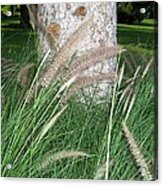 Ornamental Grass Acrylic Print