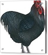 Orpington Rooster Acrylic Print