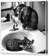 Oskar And Klaus At The Sink Acrylic Print by Mick Szydlowski