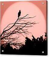Osprey Moon Acrylic Print