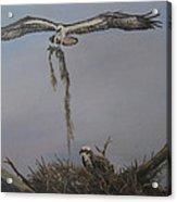 Ospreys Together Acrylic Print