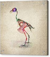 Osteology Of Birds Acrylic Print by Aged Pixel