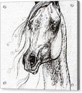 Ostragon Polish Arabian Horse 3 Acrylic Print