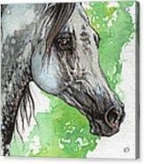 Ostragon Polish Arabian Horse Painting 1 Acrylic Print