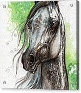 Ostragon Polish Arabian Horse Painting   Acrylic Print