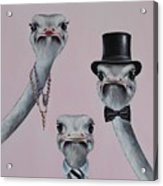 Ostrich Family Acrylic Print