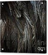 Ostrich Feather Texture Acrylic Print