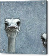 Ostriches Acrylic Print