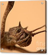 Other Insects No.001 Acrylic Print