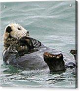 Otter At Play Acrylic Print