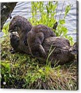 Otter Family Fun Acrylic Print