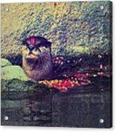 Otterly Pink Acrylic Print