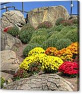 Ott's Greenhouse - Chrysanthemum Hill - Schwenksville - Pa Acrylic Print