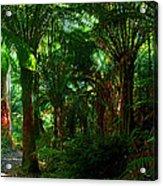 Otway Rainforest Acrylic Print