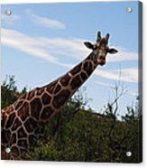 Out Of Africa 3 Acrylic Print