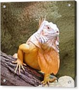 Out Of Africa Orange Lizard 1 Acrylic Print