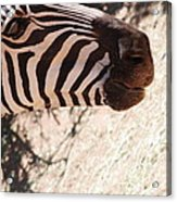 Out Of Africa Acrylic Print