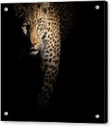 Out Of The Darkness Acrylic Print