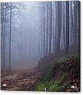 Out Of The Mist - Casper Mountain - Casper Wyoming Acrylic Print