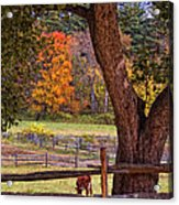 Out To Pasture Acrylic Print by Joann Vitali