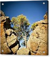 Outback Tree Acrylic Print