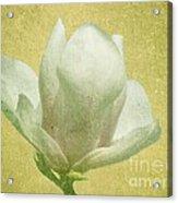 Outer Magnolia Acrylic Print