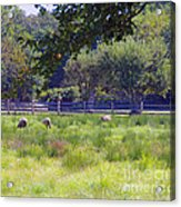 Over In The Meadow Acrylic Print