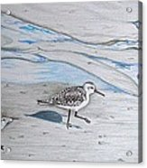 Overcast Day With Sanderlings Acrylic Print