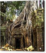 Overgrown Jungle Temple Tree  Acrylic Print