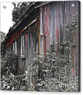Overgrown Shed B/w Acrylic Print