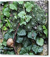 Overgrown Wall With Snail Acrylic Print