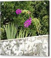Overhanging Blossoms Yaxcopoil Mexico Acrylic Print