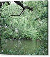 Overhanging Tree Acrylic Print
