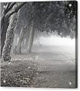 Overhanging Trees Acrylic Print