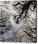 Overhead Trees In Exmoor, United Kingdom Acrylic Print
