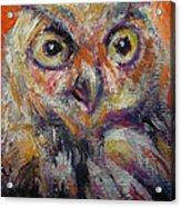 Owl Aceo Acrylic Print