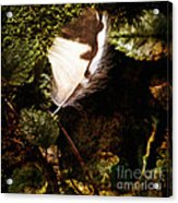 Owl Feather On Natures Canvas In Square Acrylic Print