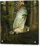 Owl In Flight Acrylic Print