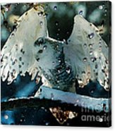 Owl In Snow Acrylic Print