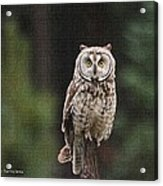 Owl In The Forest Visits Acrylic Print