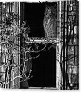 Owl In The Window Acrylic Print