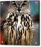 Owl Living In The Spanish Mountains Acrylic Print