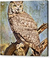 Owl On A Tree Acrylic Print