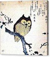 Owl On Tree Branch Acrylic Print