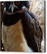 Owl Pal Acrylic Print