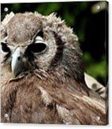 Owl Portrait Acrylic Print