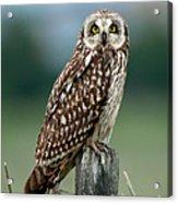 Owl See You Acrylic Print
